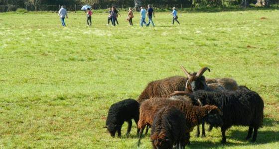 Ovelhas Missioneiras ´- São Lourenço